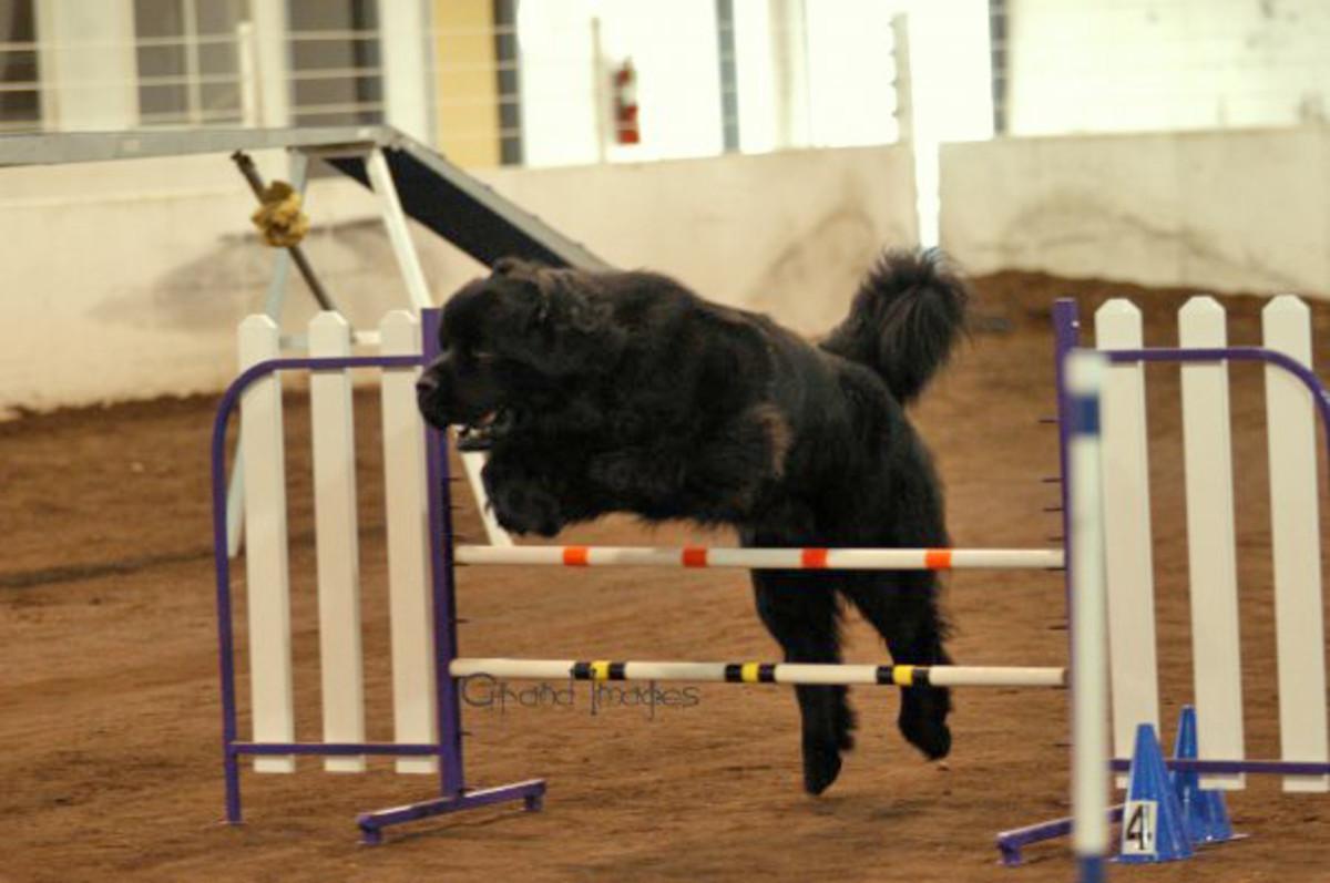 Full height bar jump