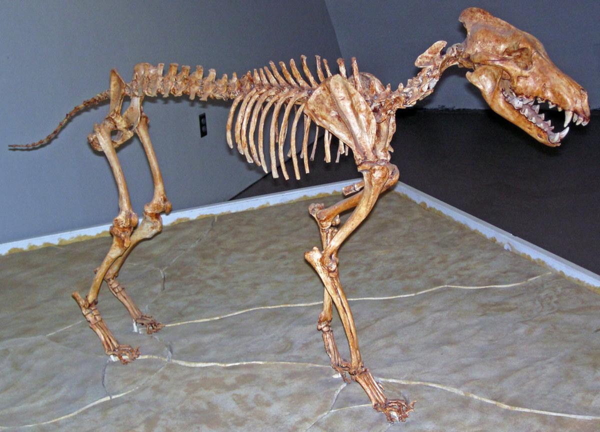 natural-ancestral-biologically-appropriate-diet-dog-wild