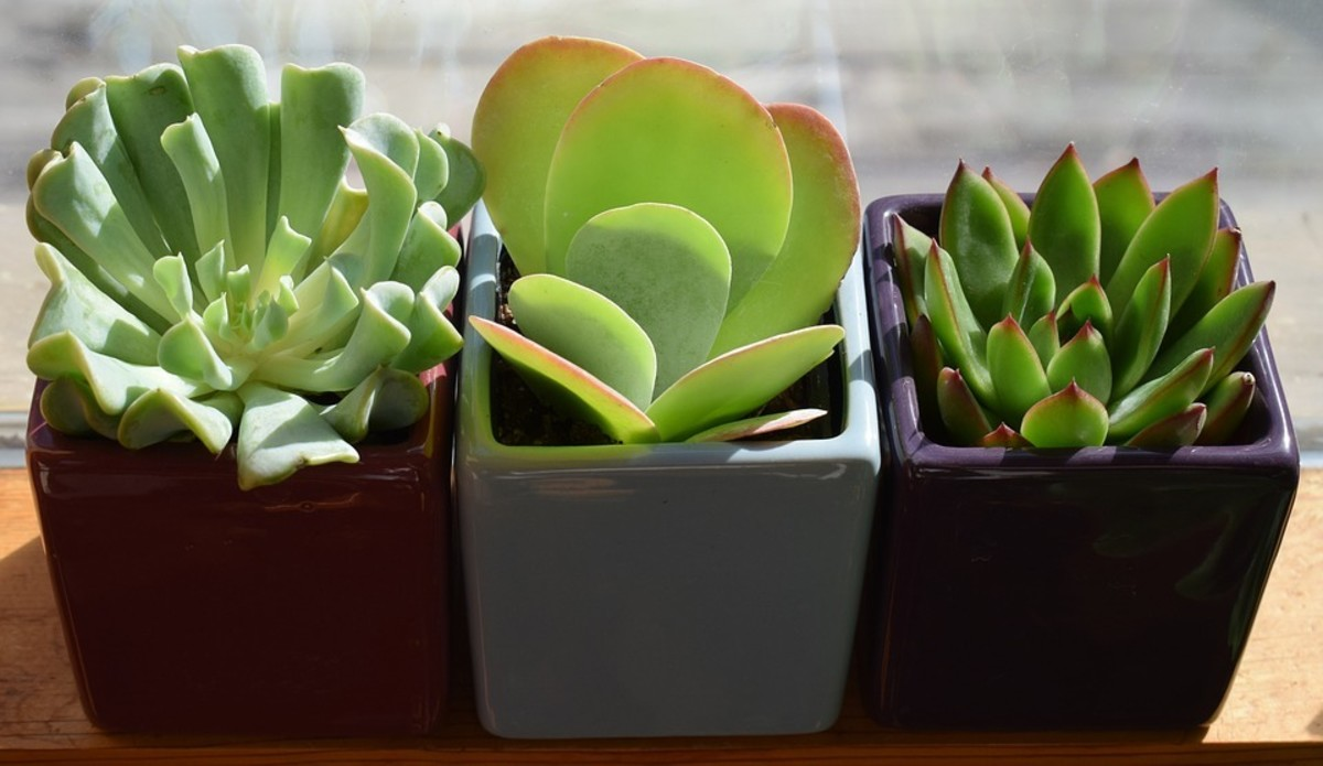 Succulents are everywhere for a reason; they're about as simple as it gets to propagate, and they're the bread-and-butter of plant swappers and sellers.
