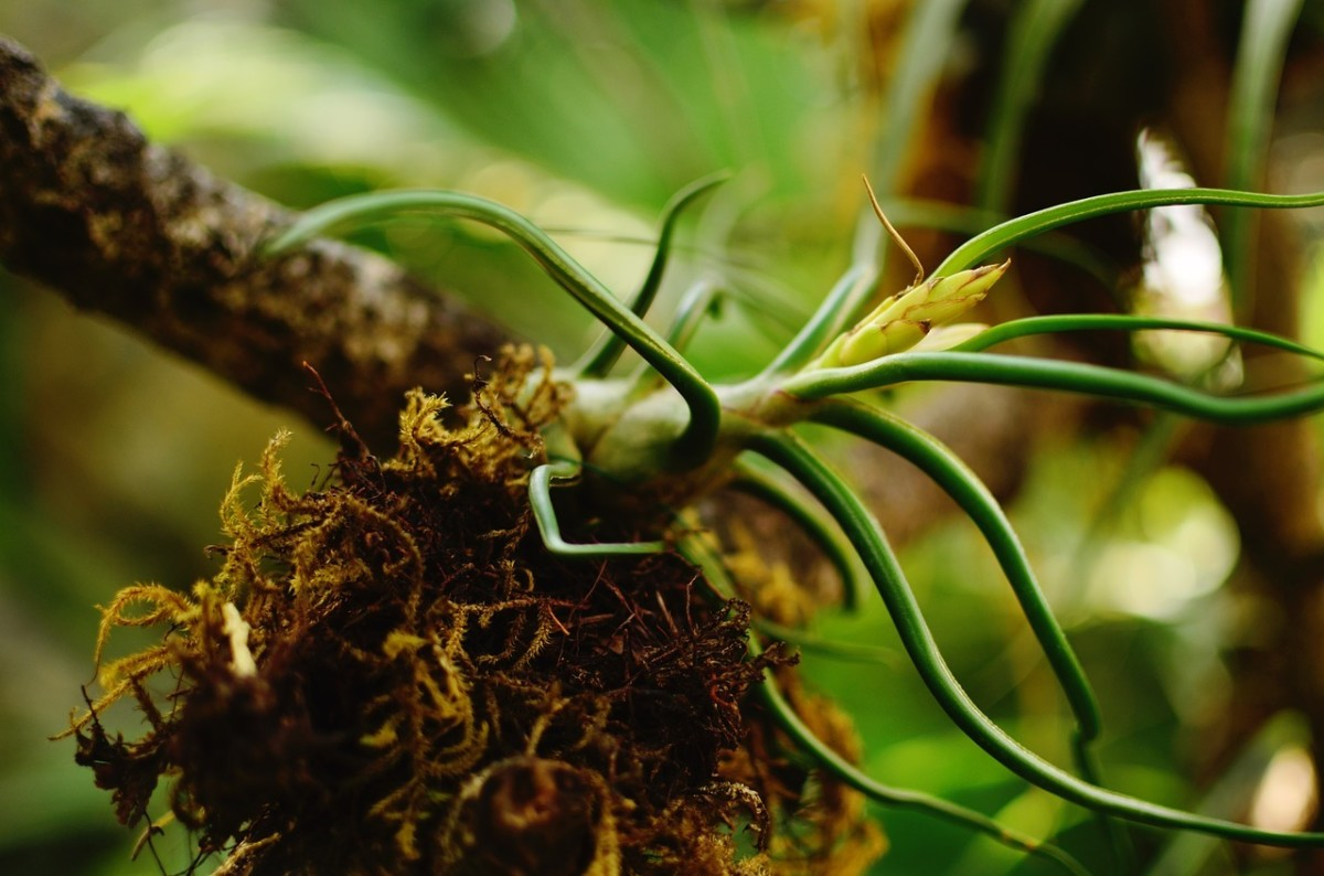Air plants aren't far behind. Given their slow growth and relative novelty, air plants make better trading fodder and command higher prices than succulents.