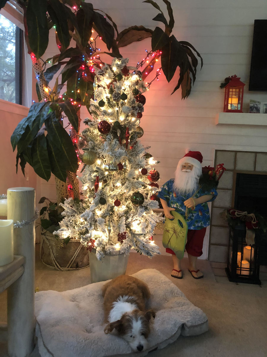 Mookie the dog seems to pout over concerns the Christmas tree might be coming down.