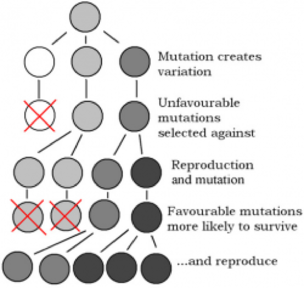 Diagram Illustrating Genetic Mutations and Natural Selection