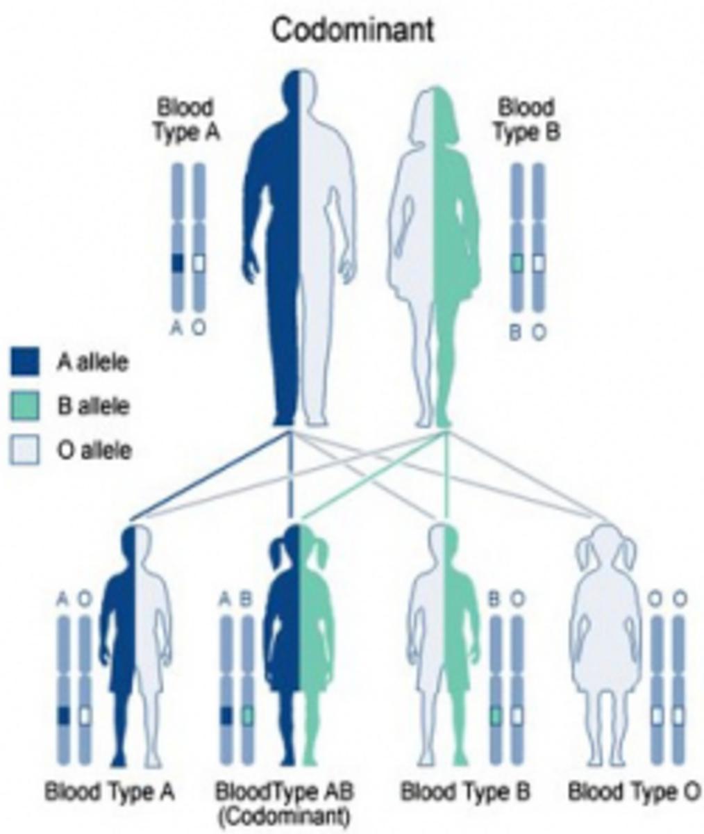 Codominant Inheritance Diagram