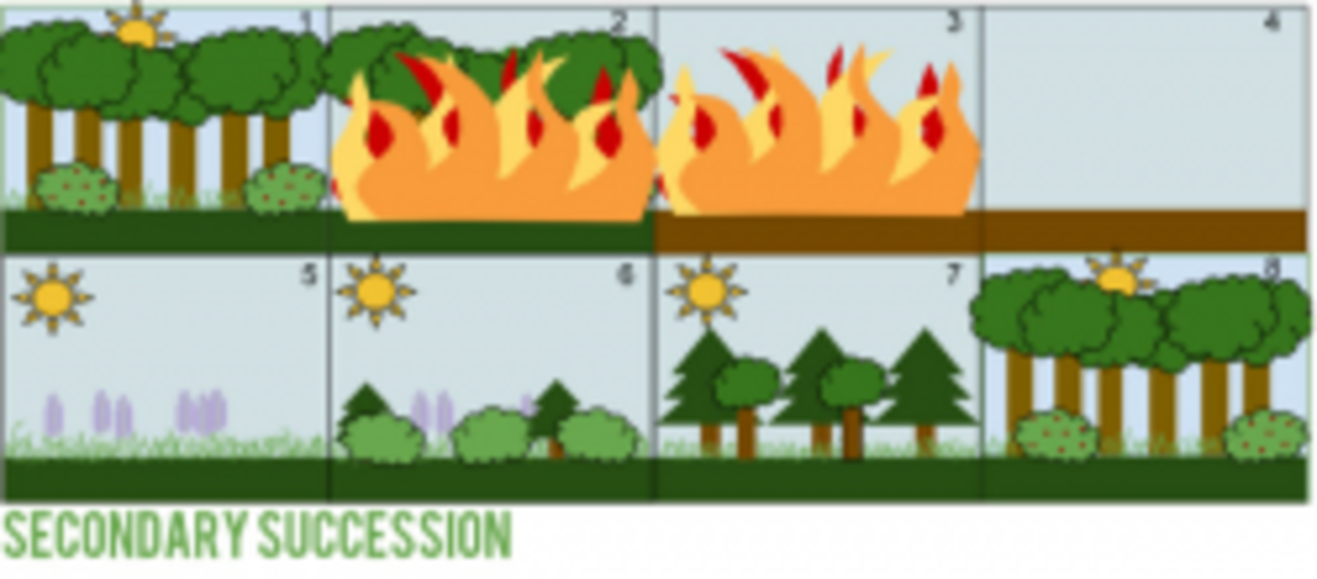 Diagram Illustrating Secondary Succession