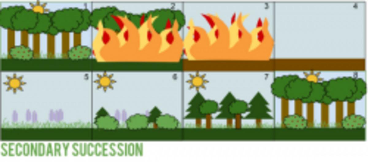Diagram Illustrating Secondary Succession