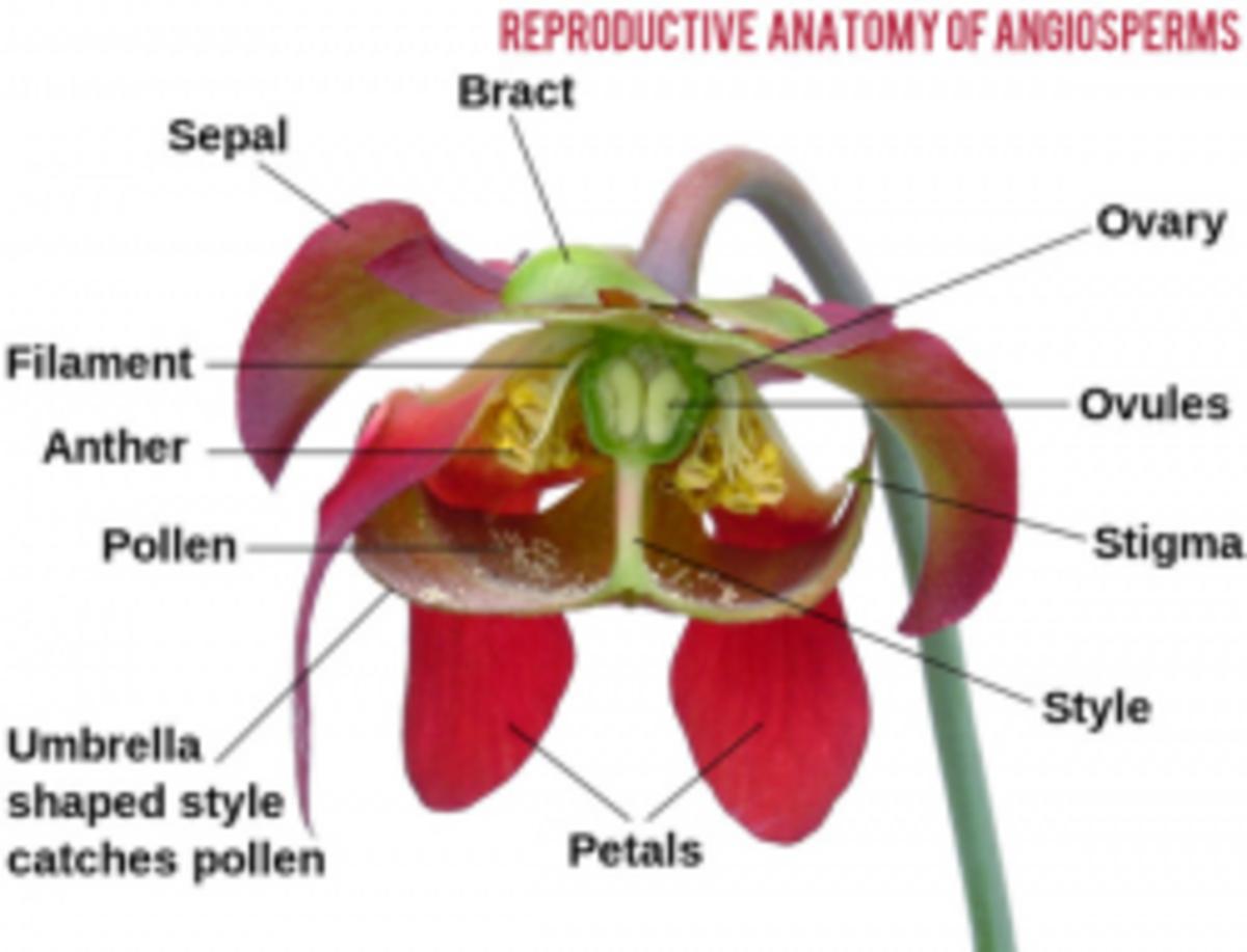 Plant Reproduction Diagram