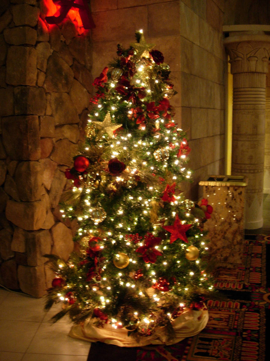 In many Catholic Homes the Christmas Tree is left up until the conclusion of the Epiphany of the Lord.