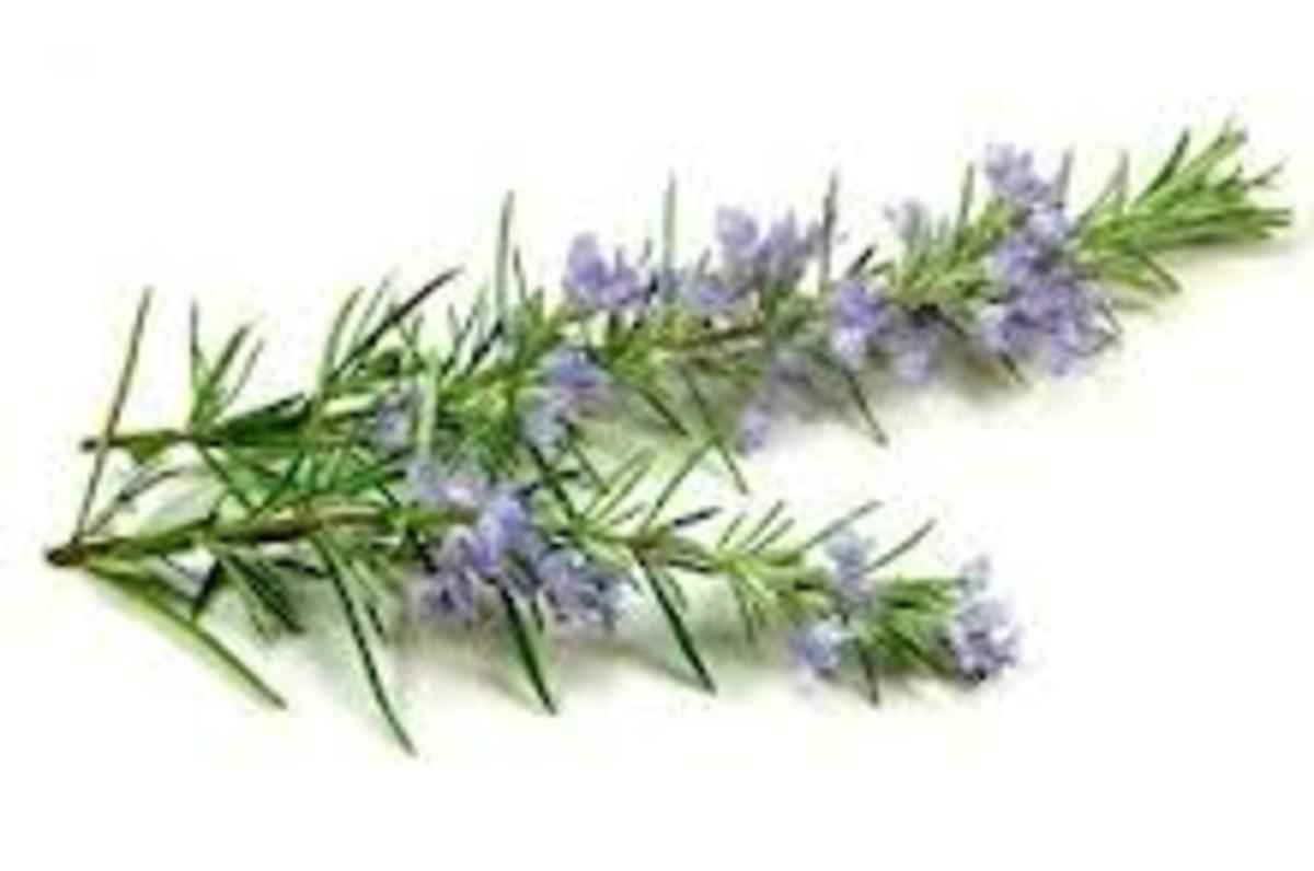 Rosemary for hair fall