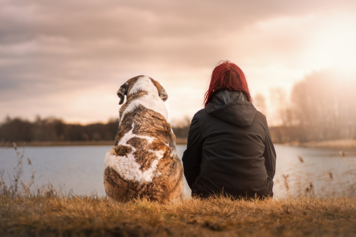 How to Know If Your Senior Dog Has Sundowners Syndrome