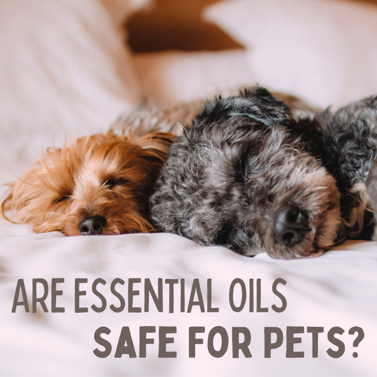 what-essential-oils-are-bad-for-dogs-and-cats