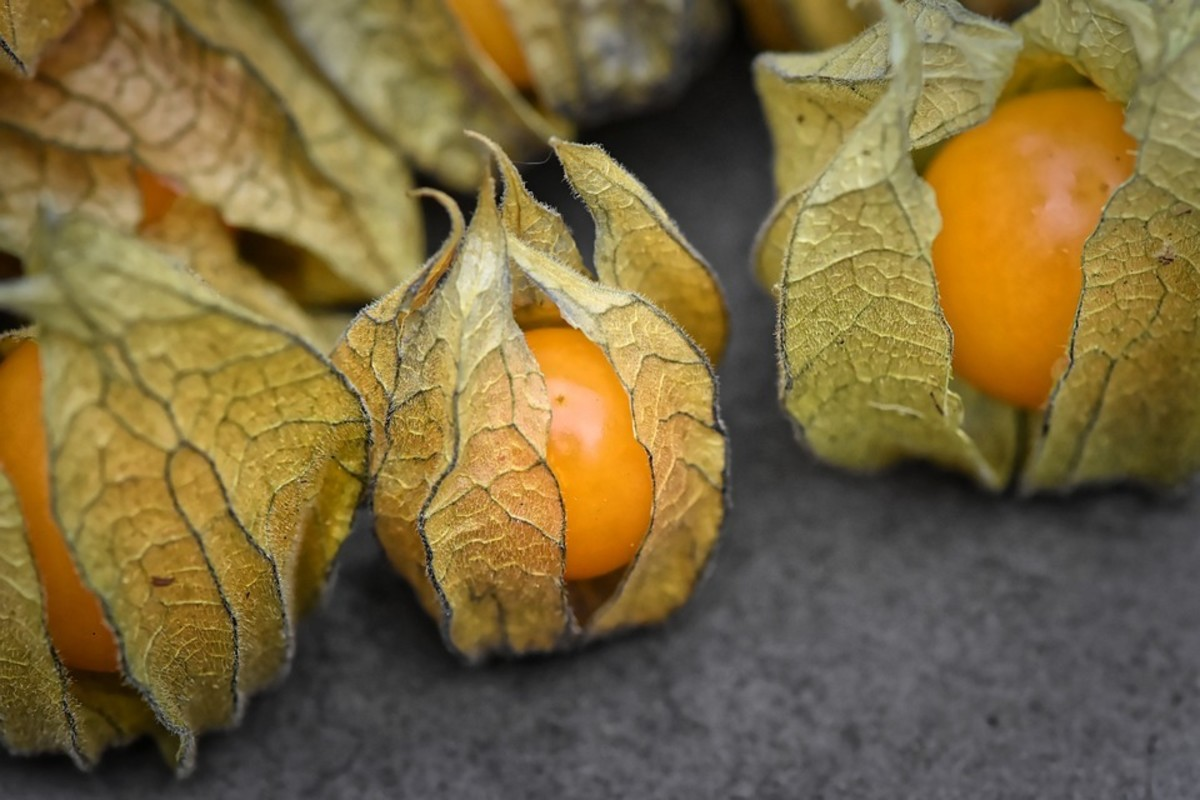 The Thing About Cape Gooseberries