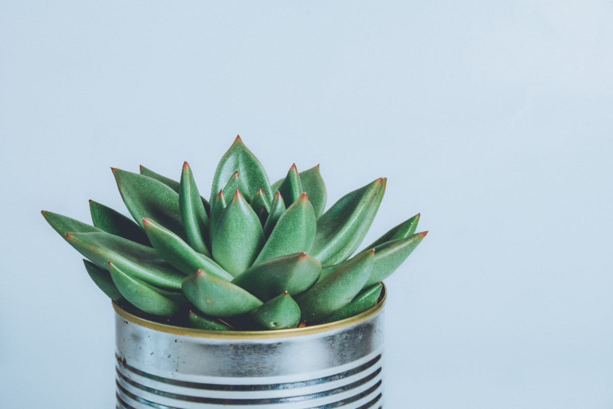to-swap-or-to-sell-part-4-of-4-where-to-sell-or-swap-your-propagated-houseplants