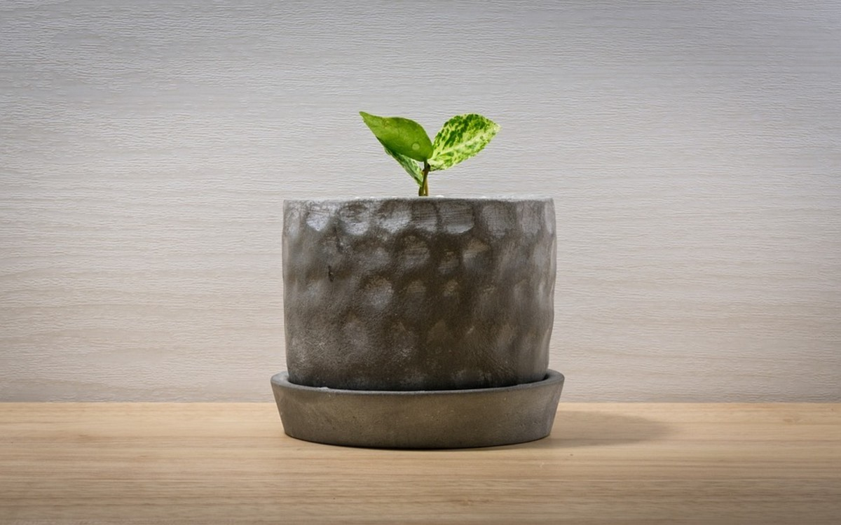 Make Houseplant Propagation Your Pandemic Side Hustle (Part 4 of 4): Where to Sell or Swap Your Propagated Houseplants