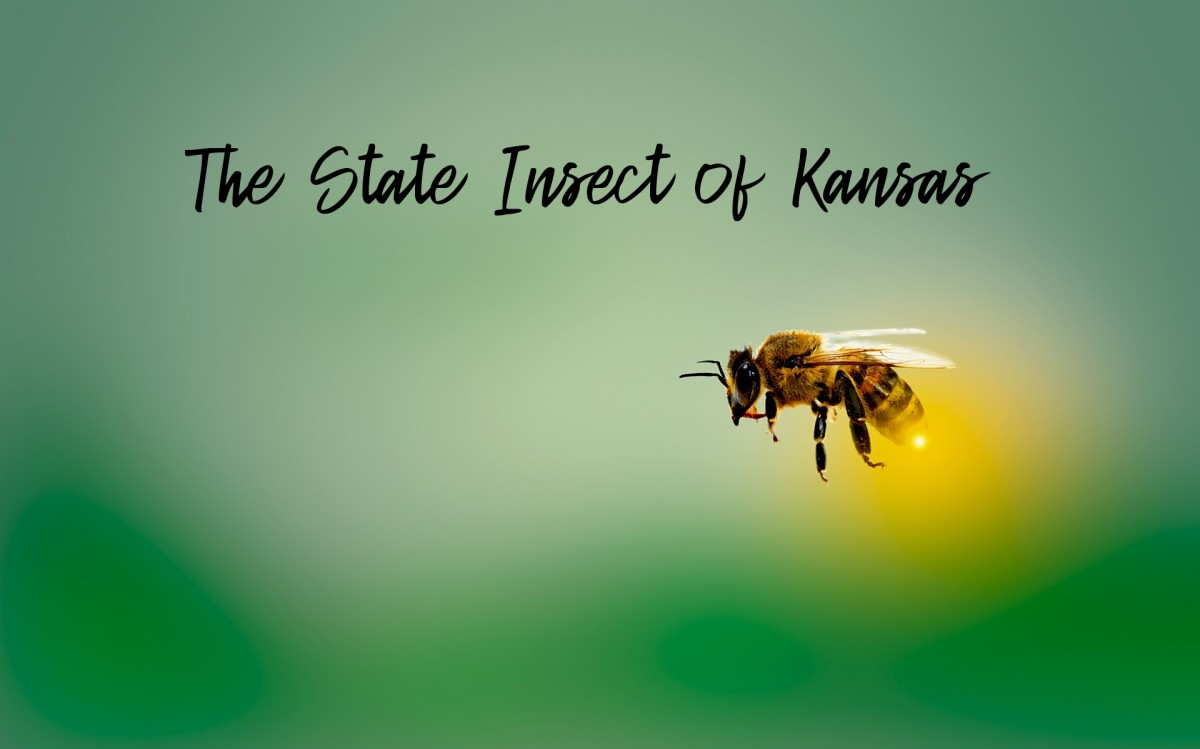 The State Insect of Kansas: The Western Honeybee