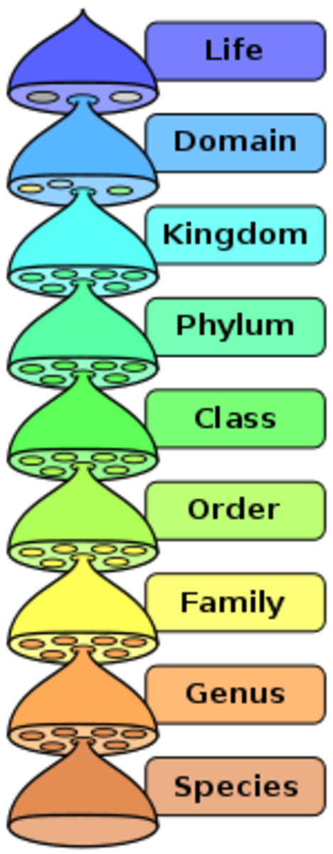 The current system of classification uses 8 taxa, with species as the basic unit This means that whilst all members of a species show variation, they are all essentially the same. As you go up, variation increases & relatedness decreases.