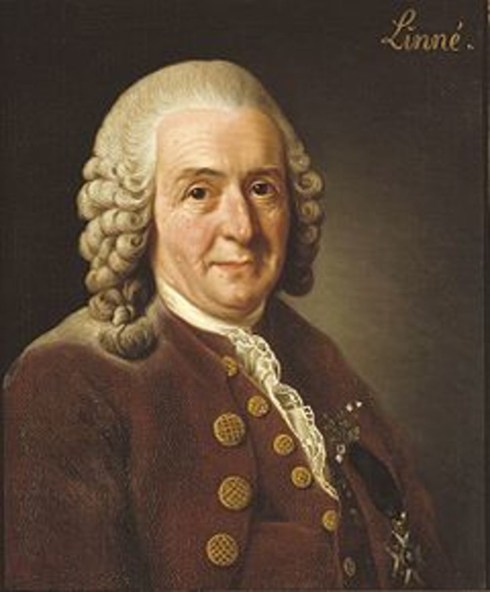 Carl Linnaeus devised the system of classification still in use today - albeit in a modified and expanded form. His original system only contained 5 taxa, compared to the 8 in use today.