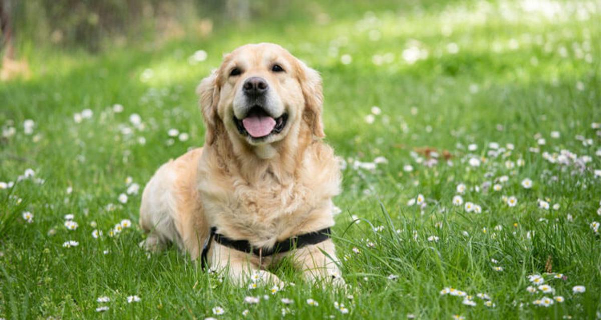 15-best-hunting-dog-breeds