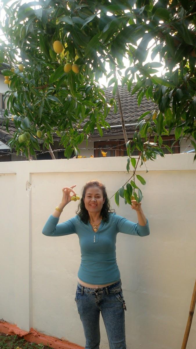 My wife Suai next to our Marian Plum tree.