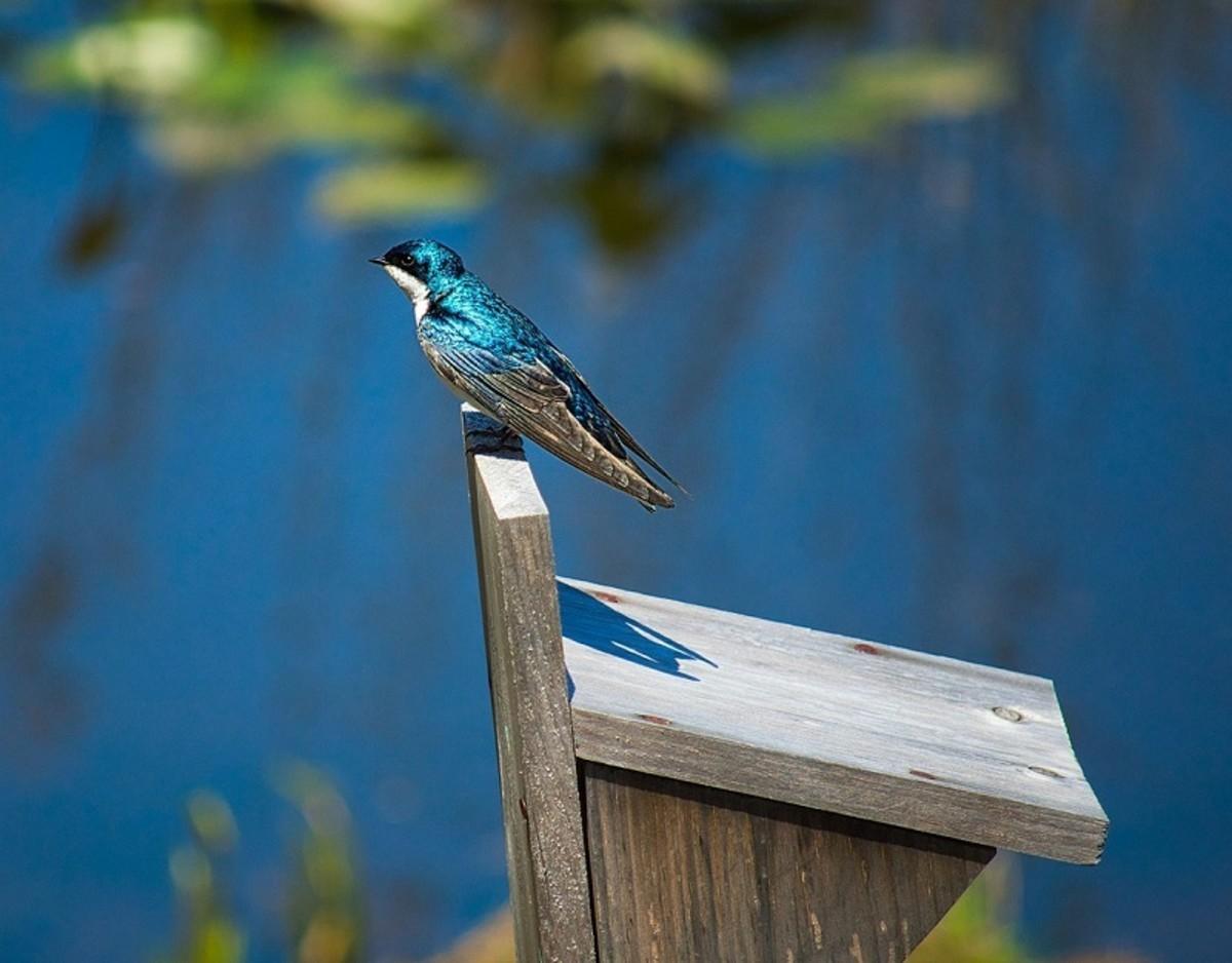 7 Gift Ideas for Bird Watchers