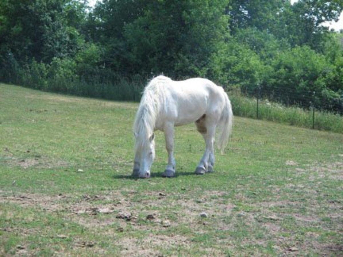 Courtesy of: http://photos.igougo.com/images/p301216-Minneapolis_MN-white_horse.jpg