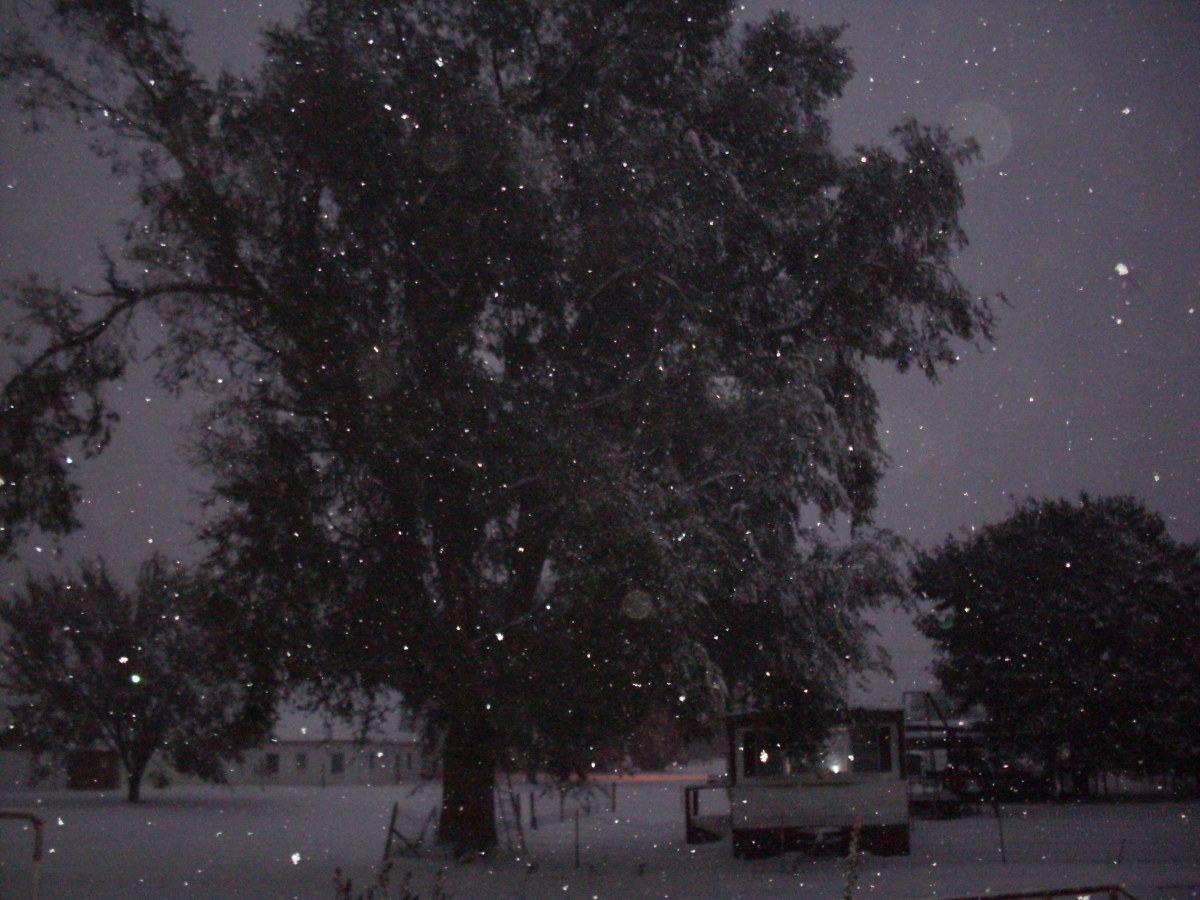The darkness and the snow was rather magical, even in town.