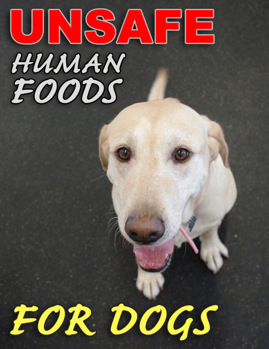 Human Foods That Are Bad For Dogs