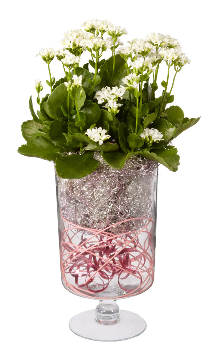 An alternative to Fresh flowers is to buy a potted plant a few days in advance. Dress the plant by placing it in a glass vase and add ribbons of wire and