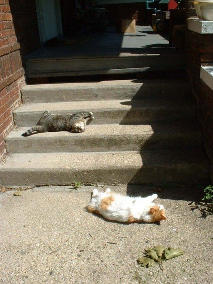 Rolling in the sunshine with a friend.