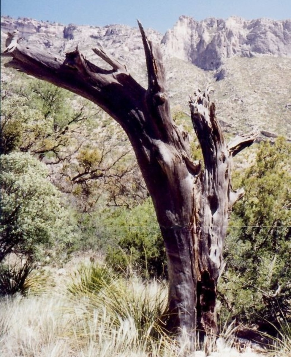 Landscape seen along the McKittrick Canyon trail