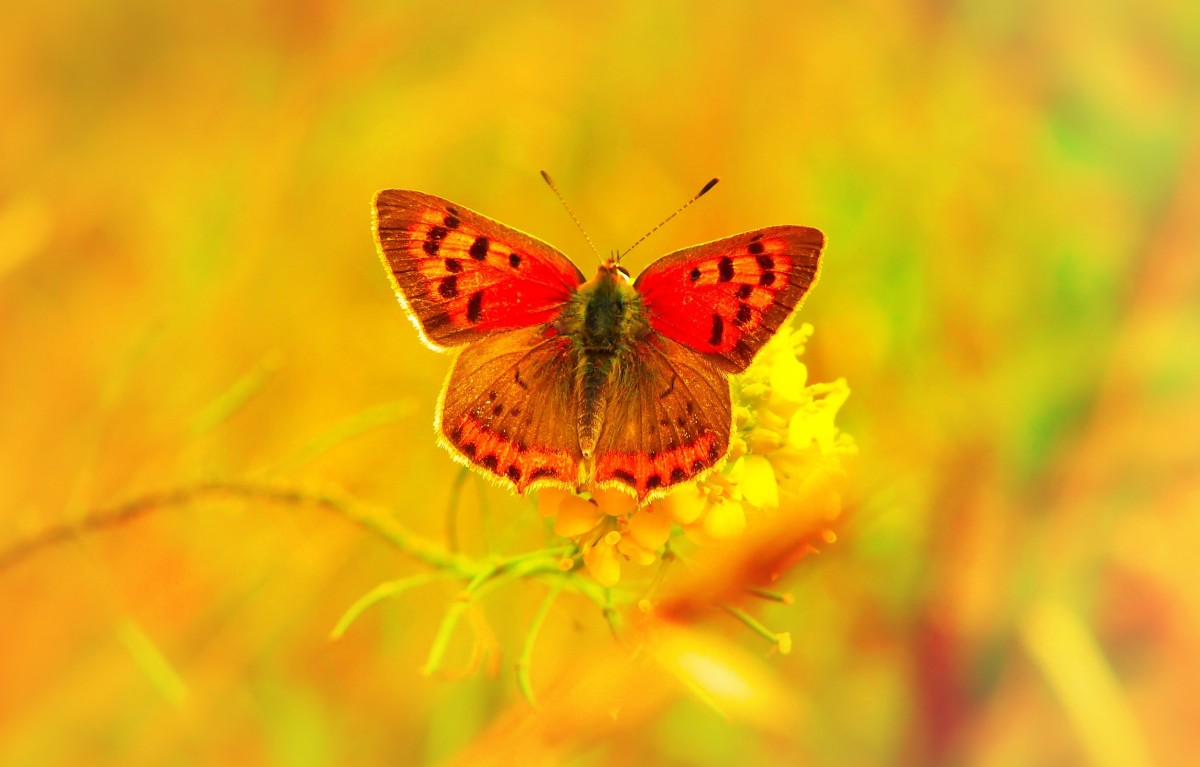 Spread your wings after you change and let your beauty show. Alberto Villoldo.