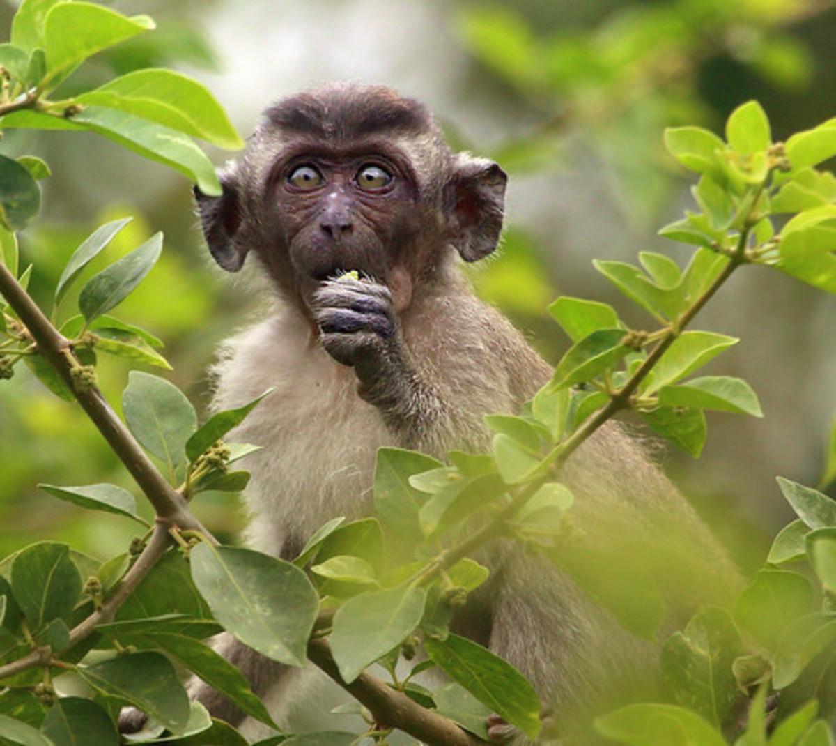 the-diseased-monkeys-of-silver-springs-florida