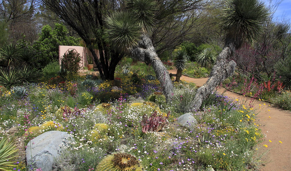 Arizona wildflower garden, good for songbirds.