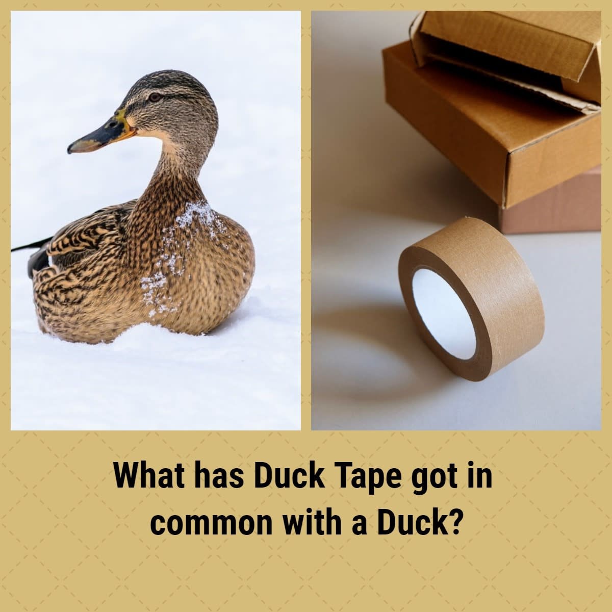It's simply imponderable! What on earth has a duck and duck-tape in common?