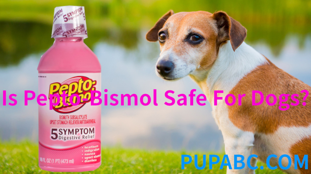 Is Pepto-Bismol Safe For Dogs?