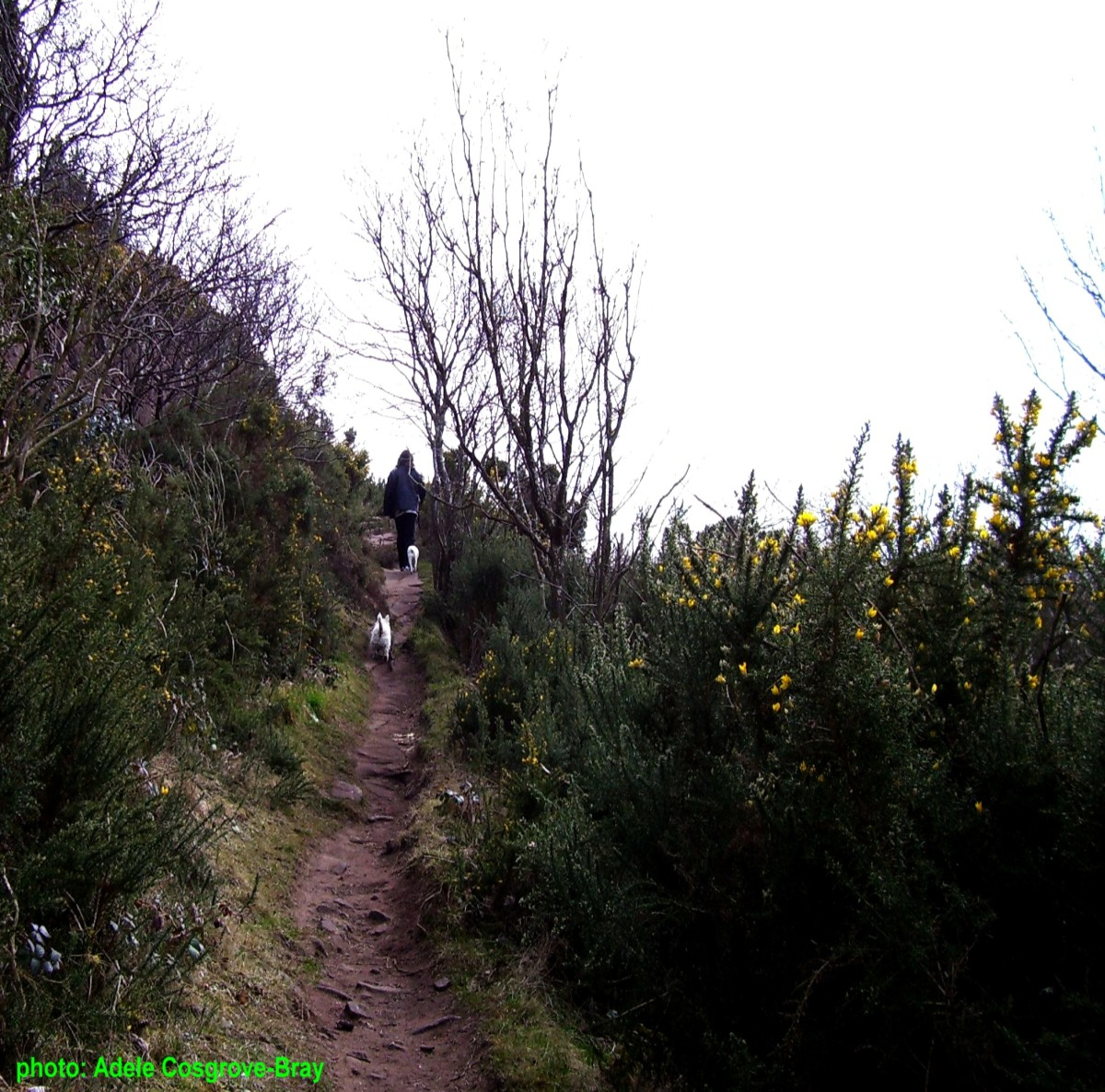 Narrow rocky trail leading to the summit of Caldy Hill.