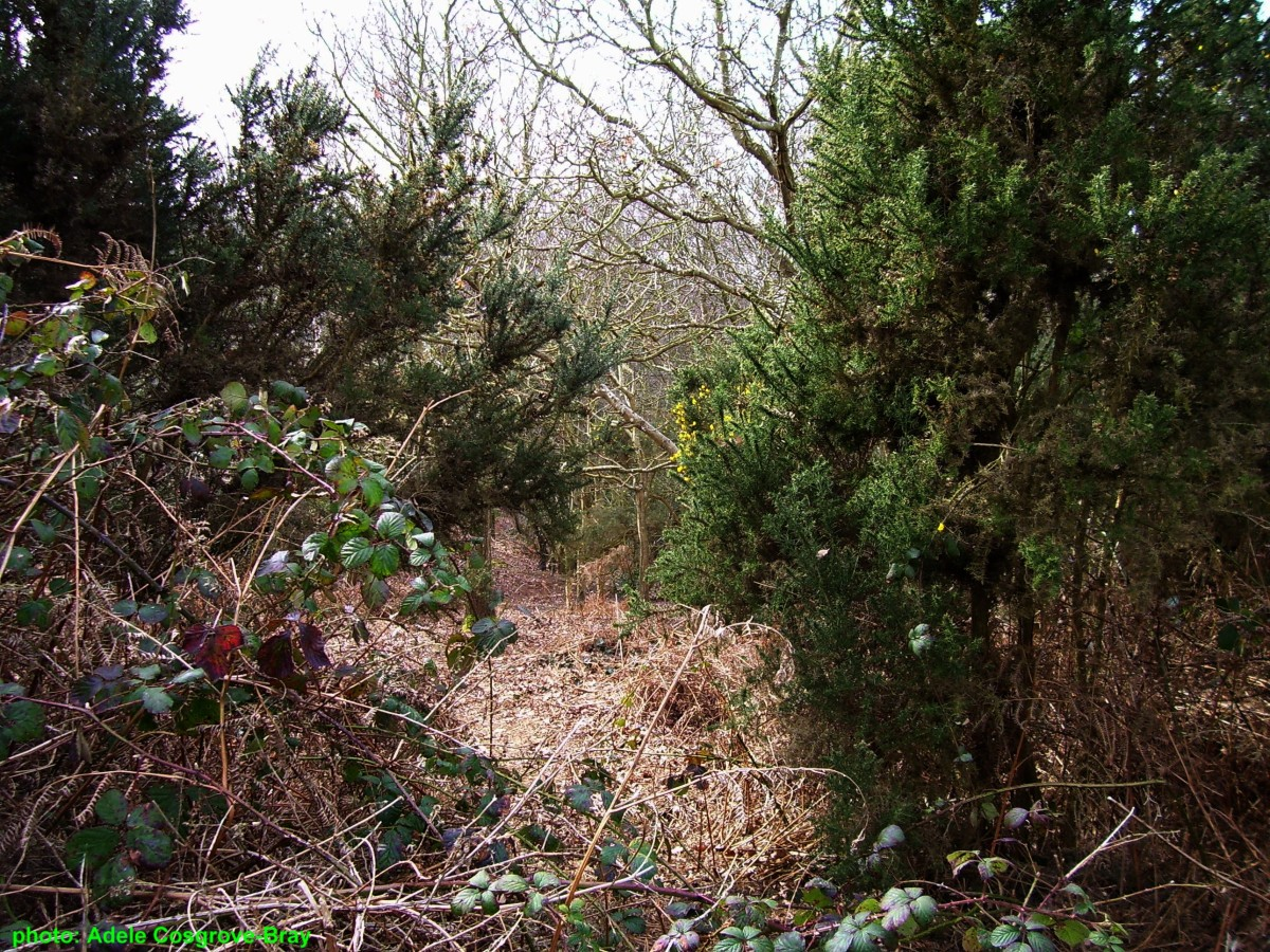 Tangled undergrowth is home to birds, lizards, mice and toads.