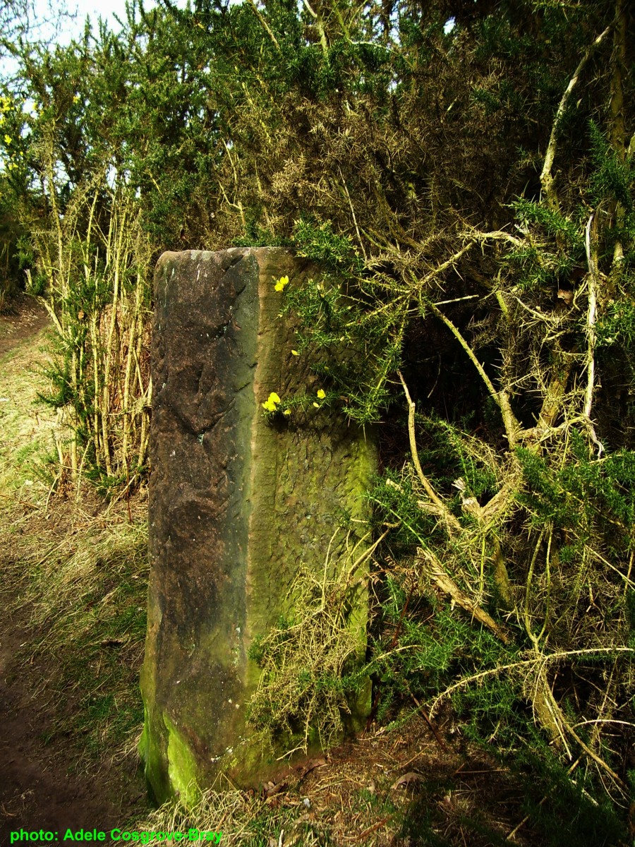 An old stone gatepost stands beside a woodland path.