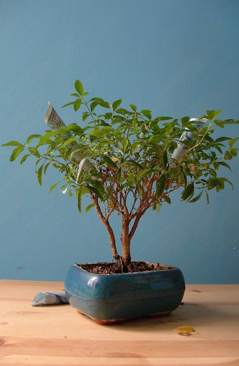 Money Tree -A money glitch dream...