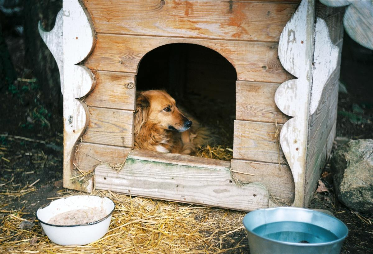 Dogs that are confined to a small space might act out when threatened.