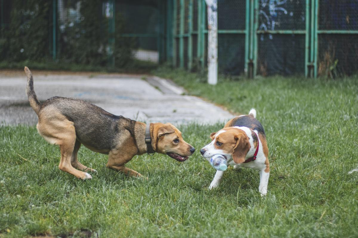 Dogs may be territorial or naturally dominant.