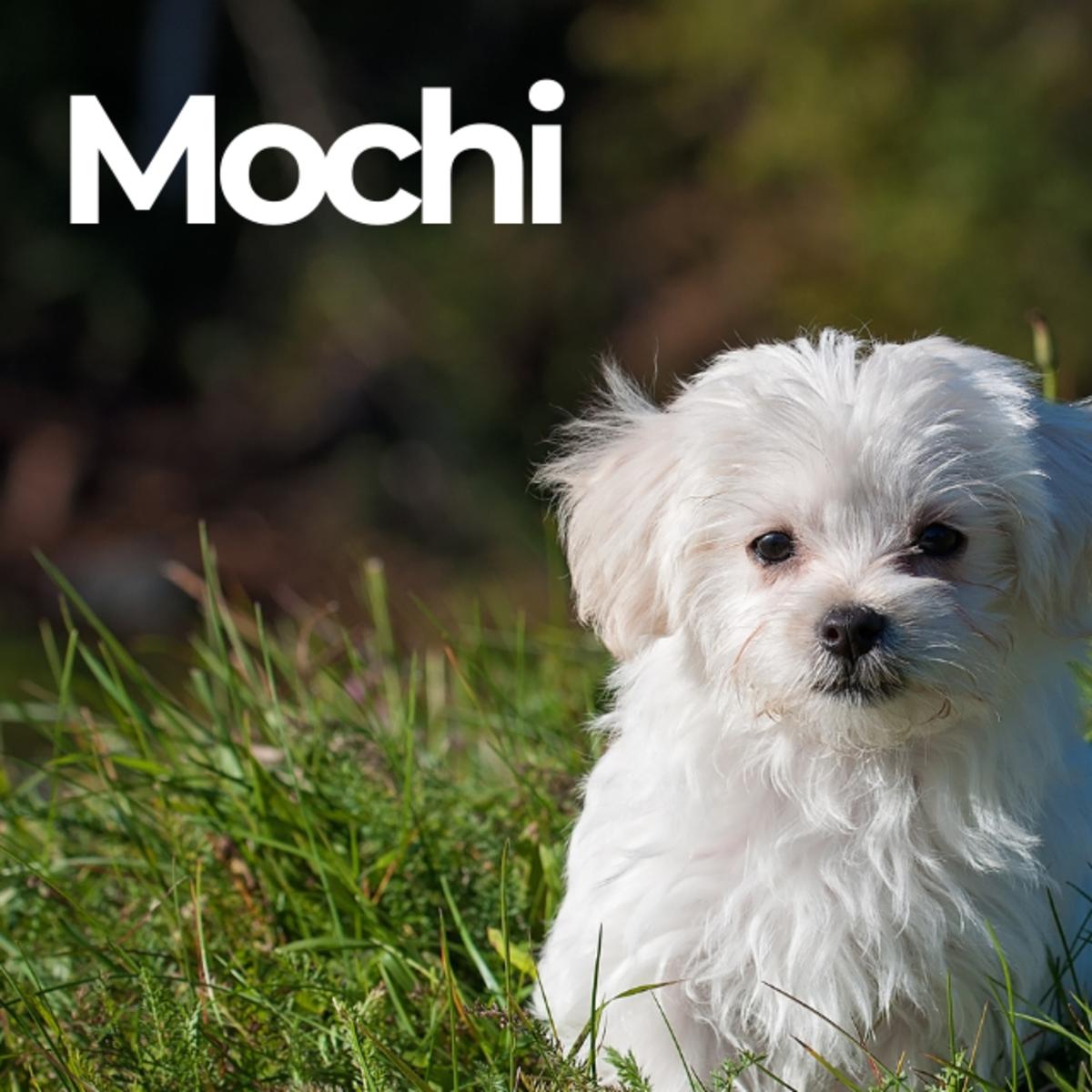 Puppy named Mochi