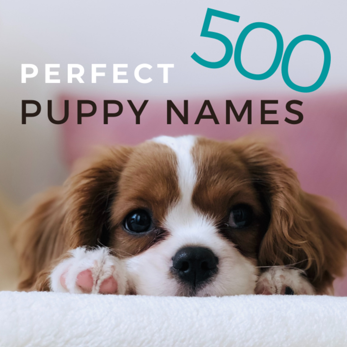 500 Perfect Puppy Names