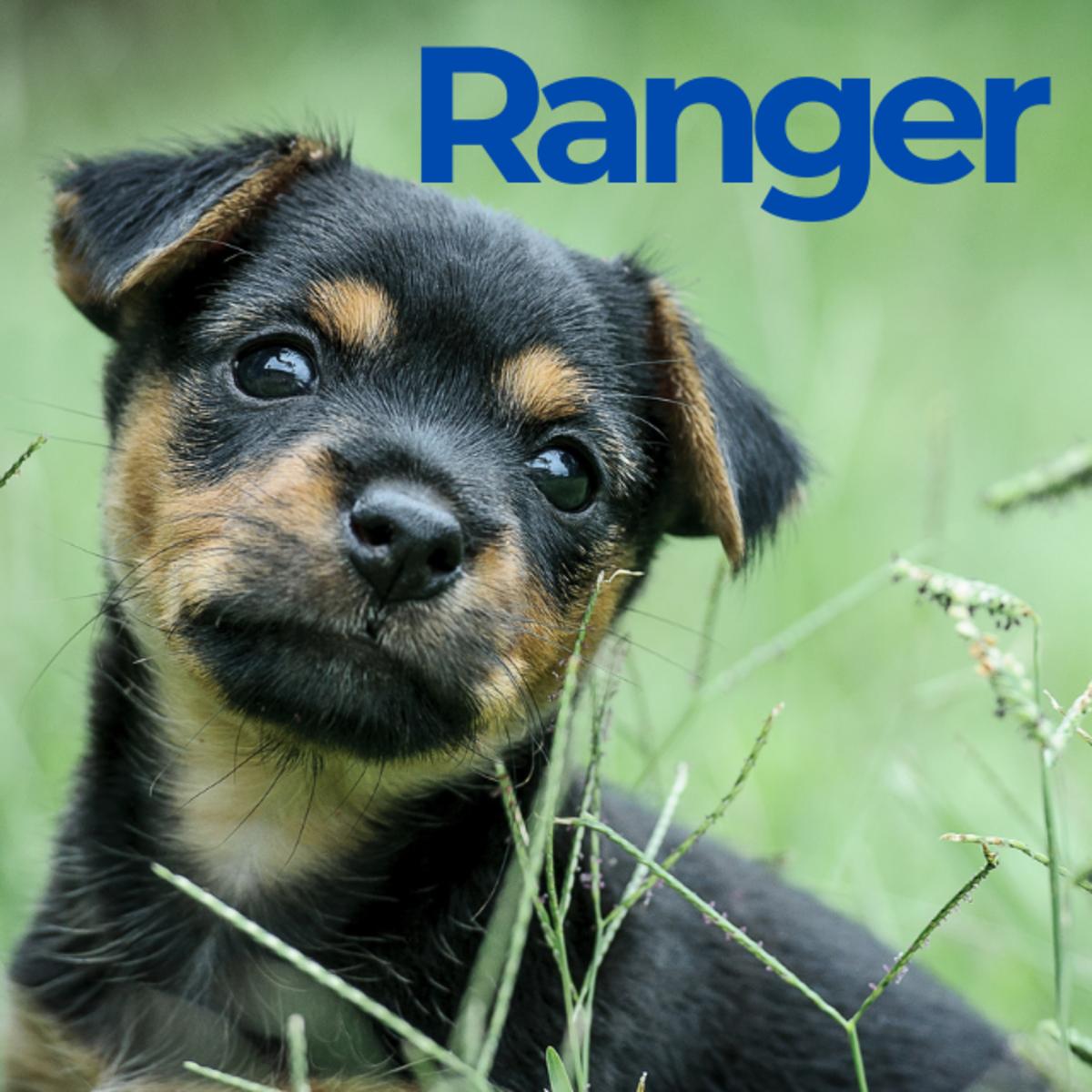 Puppy named Ranger
