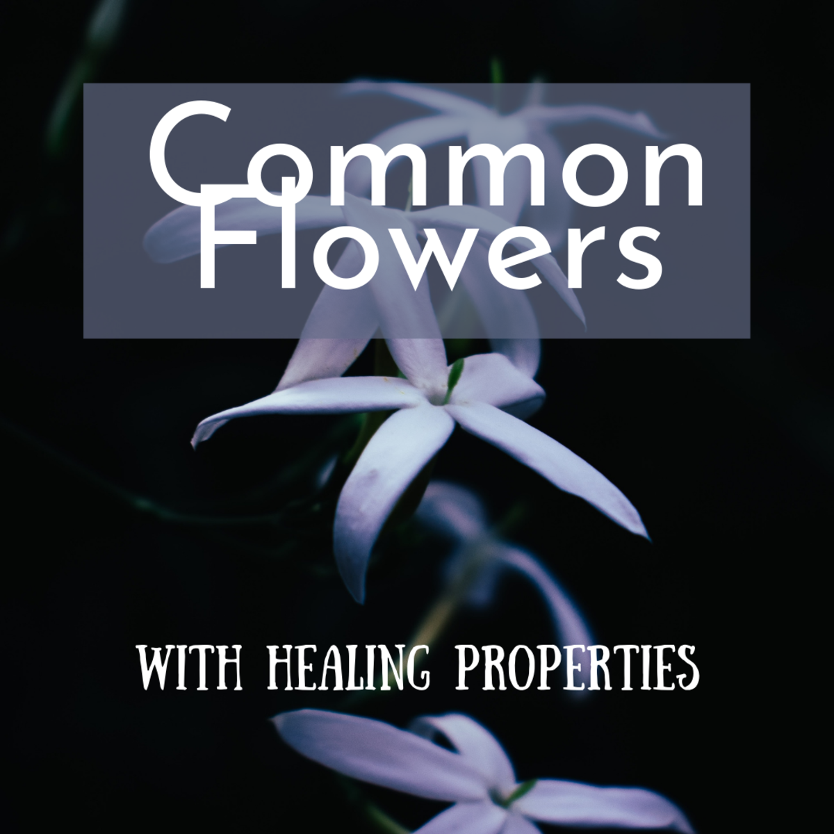 Common Flowers With Medicinal Properties