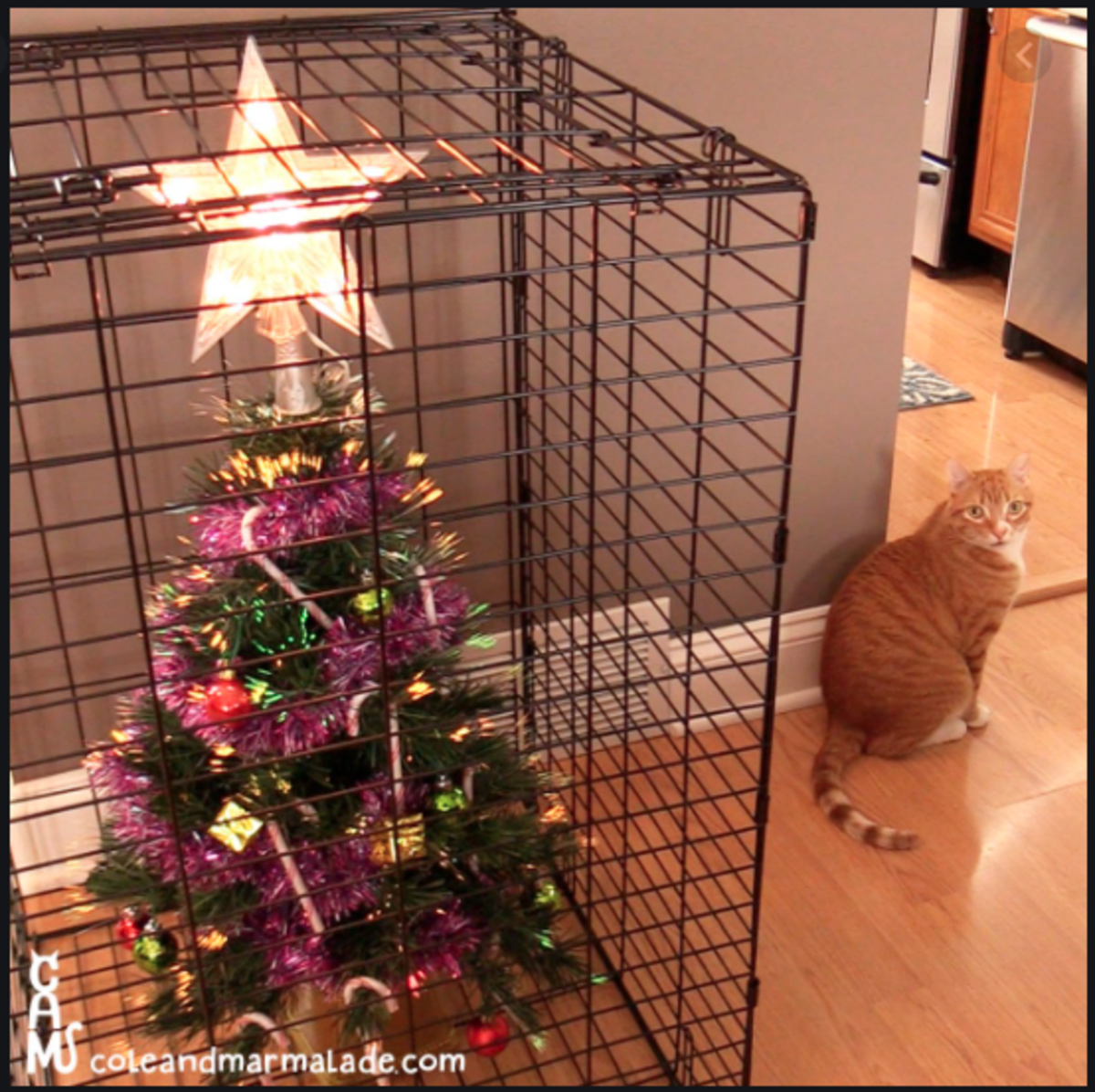 Christmas Tree in a box. A funny option  to keep the cat away.