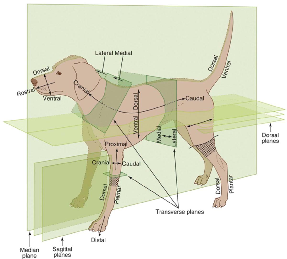 Veterinary Medical Terminology 101