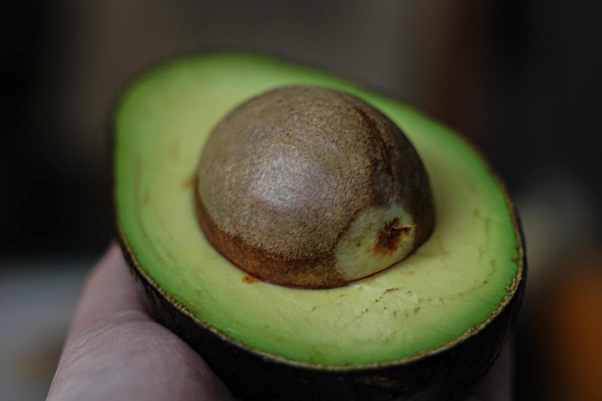 A perfect avocado by Thanti Nguyen