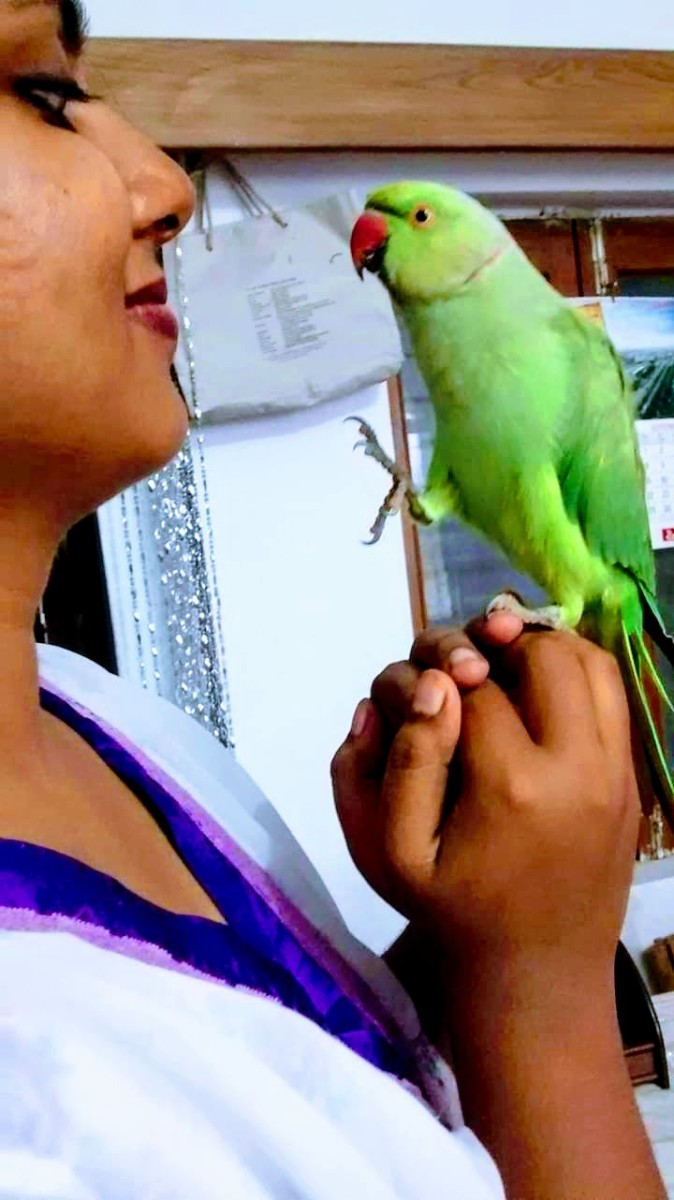 Trust builds confidence. This parrot is sitting confidently on one leg because he trusts!
