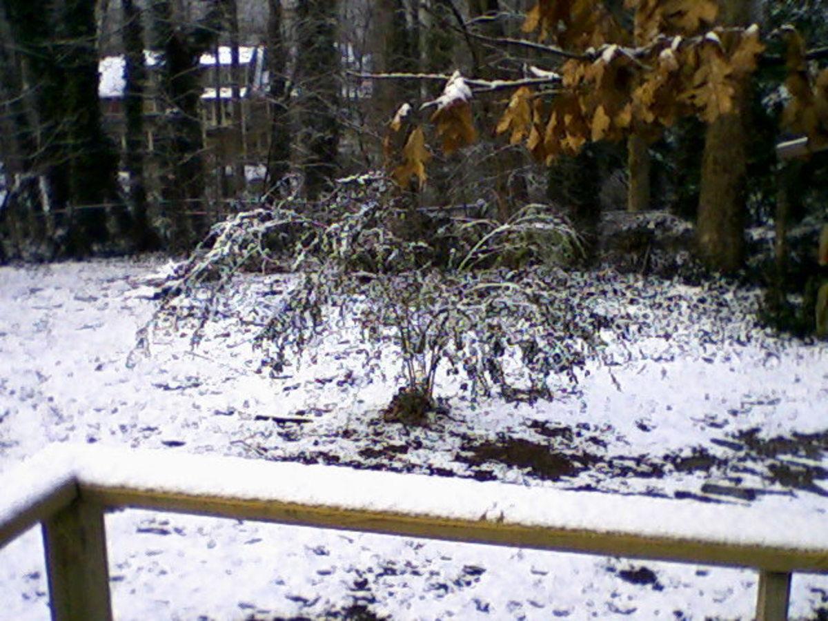 Snowy yard, February 10, 2011.  Photo by author.