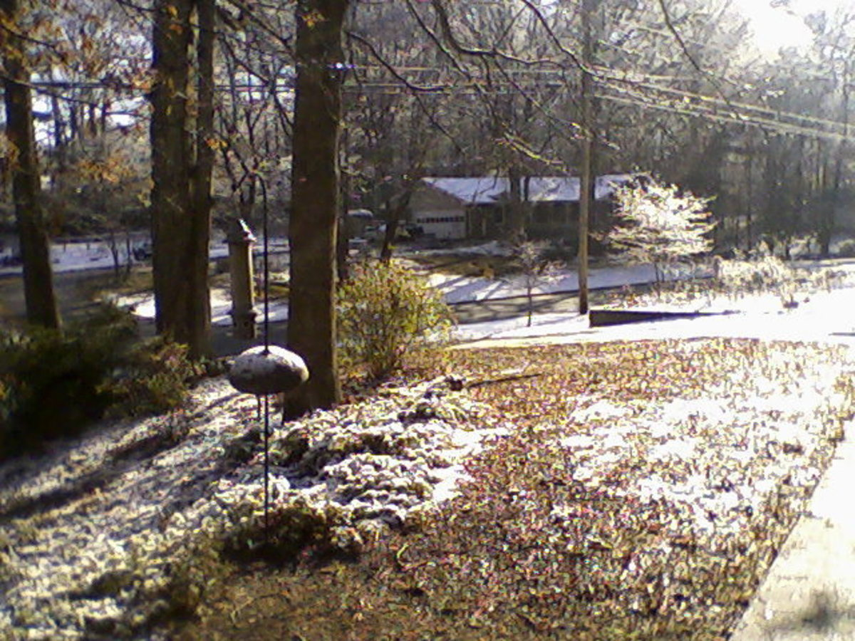 View across street, about 9 AM, February 10, 2011.  Photo by author.